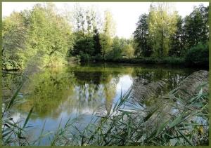étang en forêt